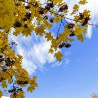 Облака сквозь листья :: Юрий Стародубцев