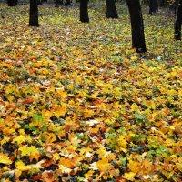 Осень :: Александр Можаров