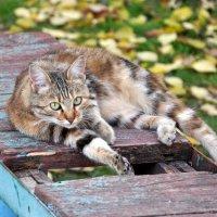 кошка :: Вероника Подрезова