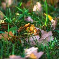 Осень, стареем вобнимку :: Светлана Масюкевич
