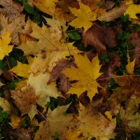 Золотая осень :: Валерий Никитин