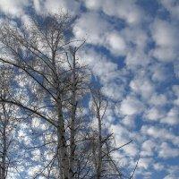 На Покров день - небо фантастическое ! :: Нина северянка
