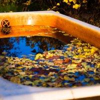 Солнечная ванна :: Алексей Гончаров