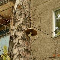 Городские грибы)) :: Алекс Ка