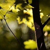 Forest :: Diana Tukhvatullina