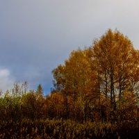 осень :: Ирина
