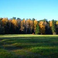 Осенний лес :: Mария Семенова