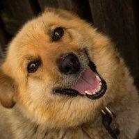 Собака :: Наталья Еловская