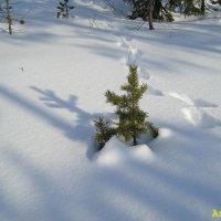 В лесу родилась ёлочка :: Андрей Васильев