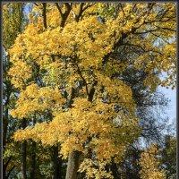 Золотая осень :: Jossif Braschinsky