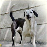 Улыбчивая собака :-) :: Алёна Михеева