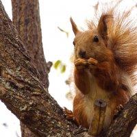 А я тут орешками балуюсь! :: Yakim Яким