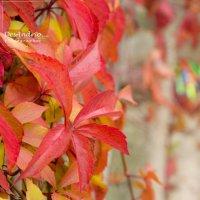 Красная осень :: Андрей Протасевич