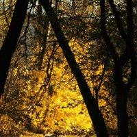 Шуваловский парк :: Kir_v Veles
