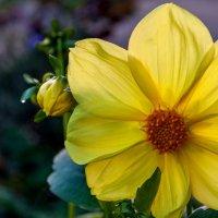 Осенние цветы! :: Yakim Яким