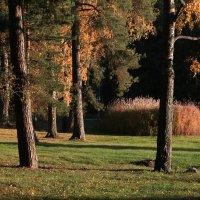 Хельсинки.Осень на острове Лауттасаари. :: Vitaliy Korbut