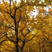 Обволакивающий лес. :: Юрий Клишин