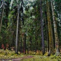 Forest :: Stanislav Baynov