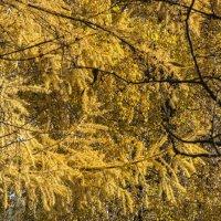 Осень и люди :: Сергей Савельев