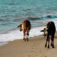Коровки и океан. :: Edward J.Berelet
