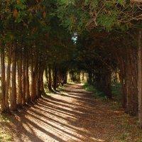 Измайловский парк :: Елизавета Зуева