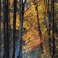 Осенний вечер :: Oleg Ko