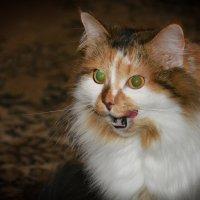 моя кошка :: Екатерина Казакова