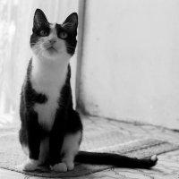 Кошка :: Наталья Еловская