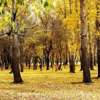 На ковре из жёлтых листьев.. :: Александр Садовский
