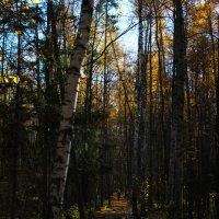 Осенний лес :: Анастасия Д