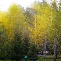 Осень :: Аркадий Медников