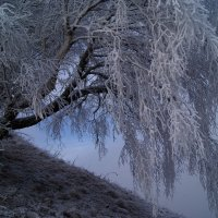 Берёзка. :: Виталий Шевченко
