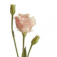 Цветок :: Lidiya Dmitrieva