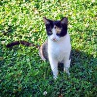 Стамбульский кот :: Olga Kopacheva