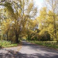 Осень золотая. :: Андрей В.