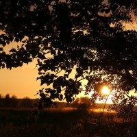 Закат солнца :: Татьяна Савранчук