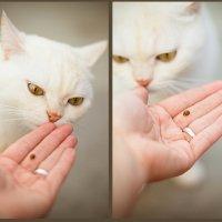 жук и кот :: Юлия Гладкова