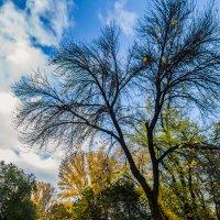 Яркие краски осени :: Евгений Малютин