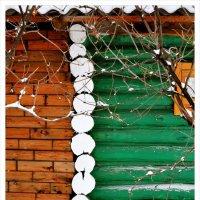 Ягода зимой... :: Александр Копалов