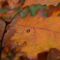 осень :: Леночка Болобан