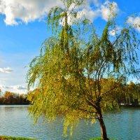 Измайловский парк :: Светлана .