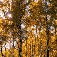 Осень :: Svetlana Orinina