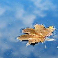 Листик плавает в облаках :: Нилла Шарафан