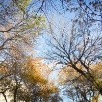 Осеннее кружево :: Юля Юля