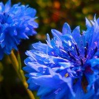Любимый цветок :: юрий Амосов