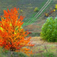 дорога в осень :: Marina Timoveewa