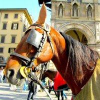 Флорентийская лошадка :: Olga Devyatkina