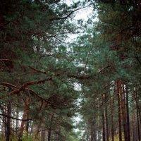 дорога в лесу :: Елена Мизенко