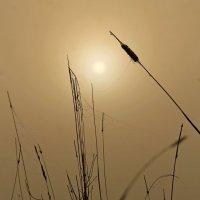 Туманное утро.. :: Александр Герасенков