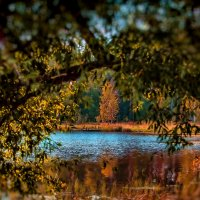 На озере :: Сергей Кудрявцев